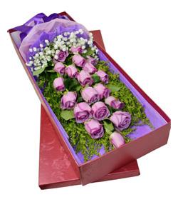 19枝紫玫瑰花盒(图片)-爱慕鲜花速递
