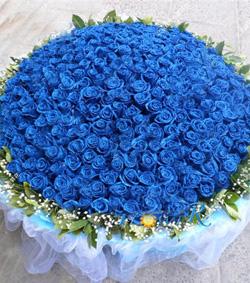 999枝蓝玫瑰(图片)