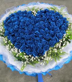 99枝蓝色妖姬(图片)